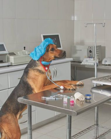 esterilización de perro
