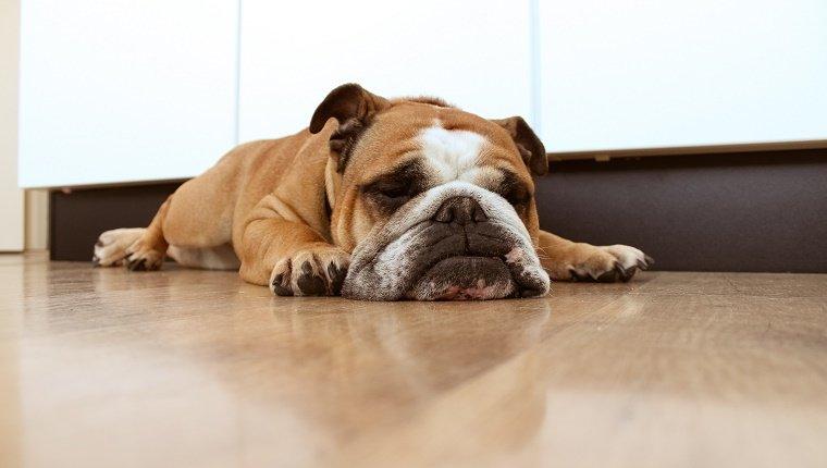 dog-sleep-habits-3.jpg