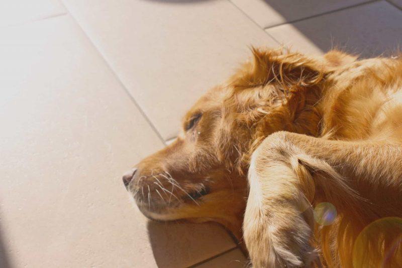 como duerme un perro