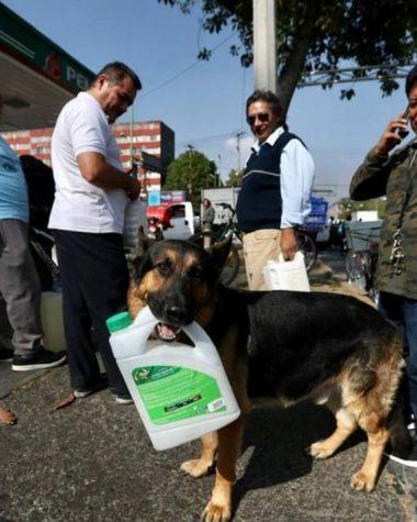 perro de gasolinera