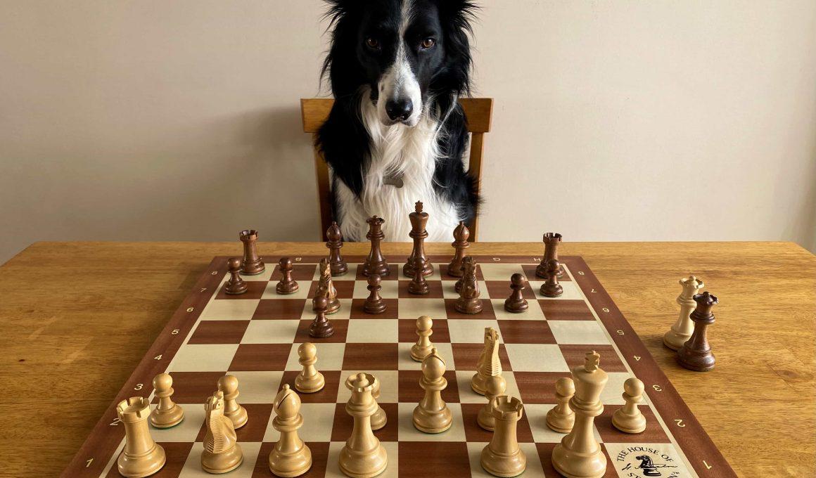 perros inteligentes